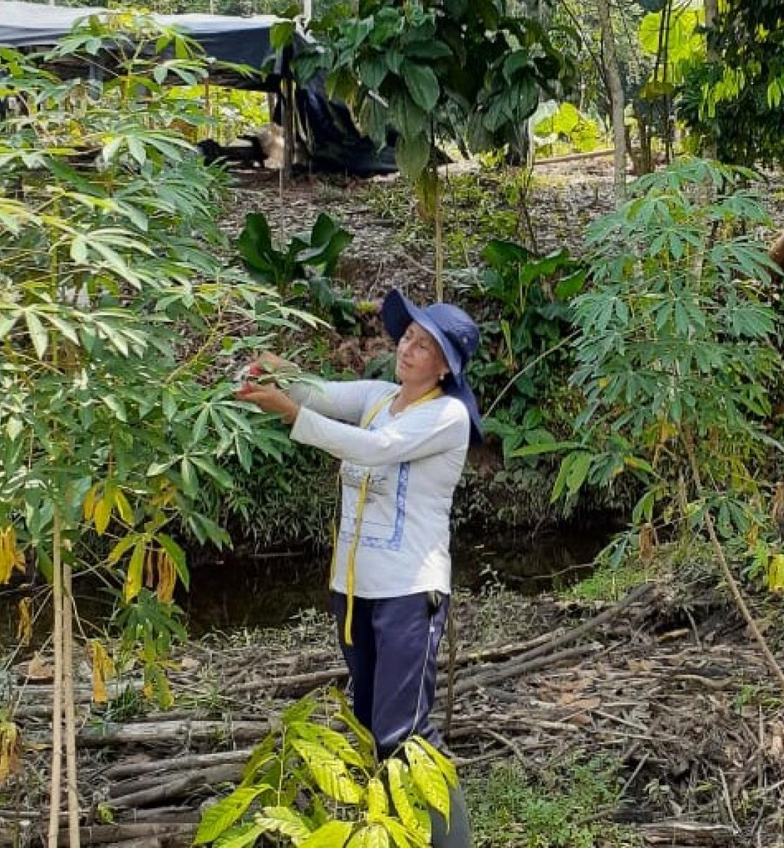 A woman in a blue hat and a white shirt collects crops from a tree.