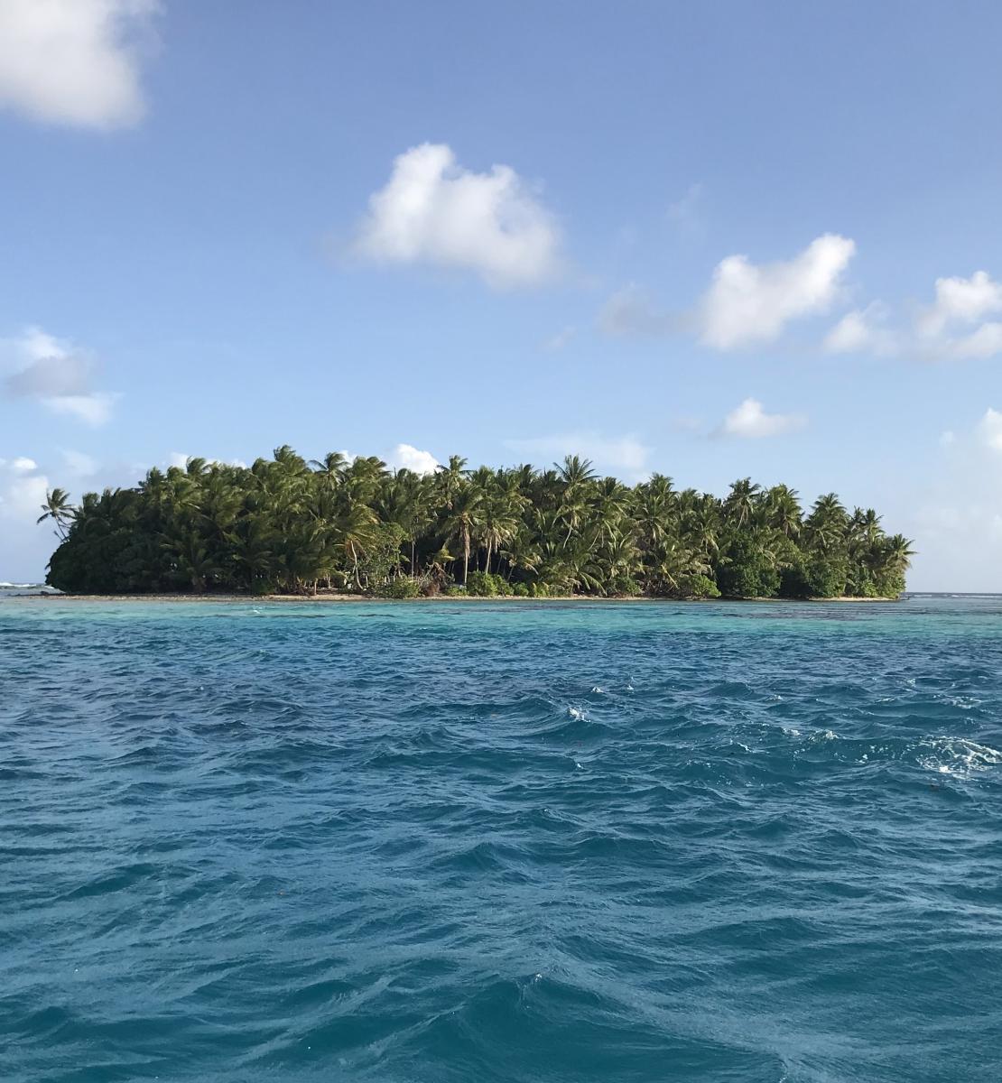 منظر طبيعي لجزيرة مليئة بالأشجار في المحيط في يوم مشمس.